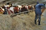 Акционерное общество «Заря» является племенным заводом по разведению крупнорогатого скота айрширской породы. Молочное производство.